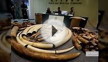 Vietnamese customs seized two tons of elephant ivory in
